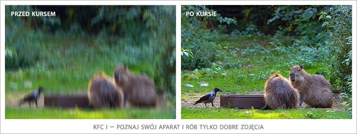 KFC I – poznaj swój aparat i rób tylko dobre zdjęcia. WarsztatyFotograficzne.pl